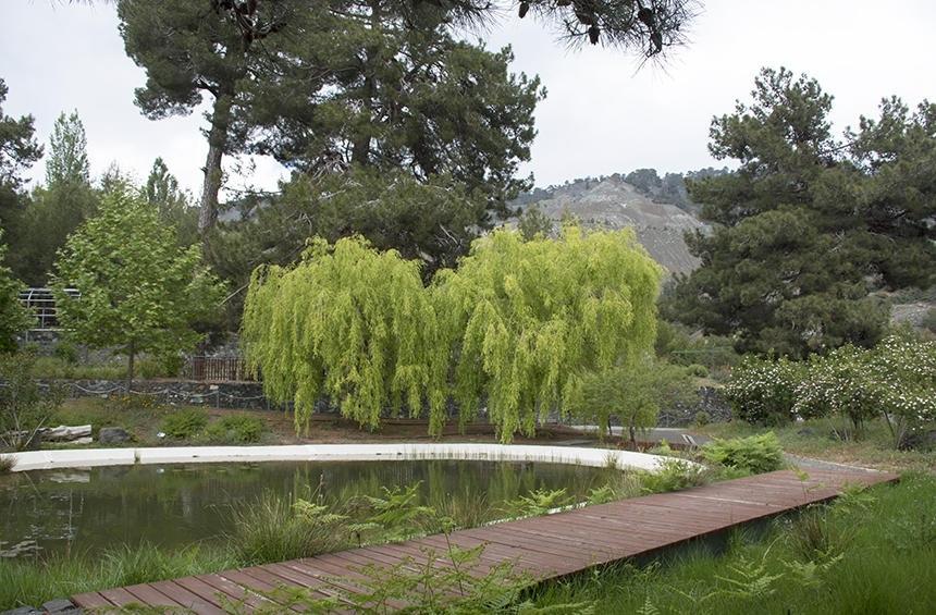 Ботанический сад Троодоса на высоте 1400 метров над уровнем моря! (Фото): фото 7