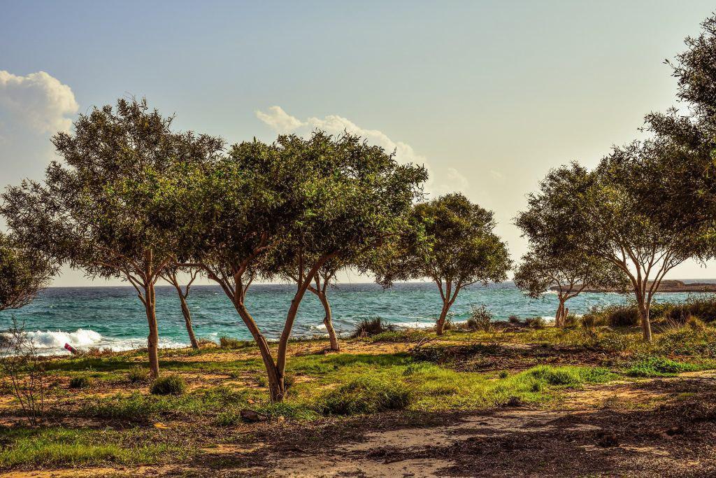 Погода на Кипре - первая половина зимы